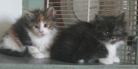I may be getting the kitten on the right! :D