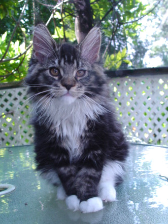 Aww, so cute! What's his name? This is my kitten: