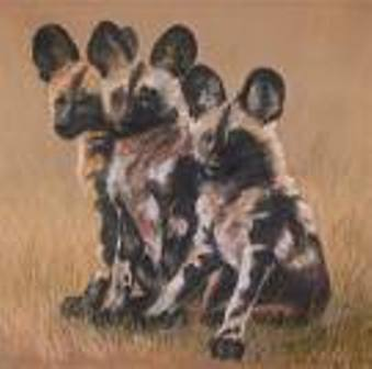 these r wild anjing not kucing atau wolves! Heres what a wild dog looks like: