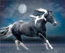 馬 Rock! They are wonderful creatures! Everyone should have a horse to call their own! I will po
