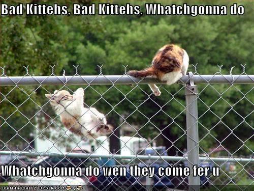 Funny kitahs..... LoL