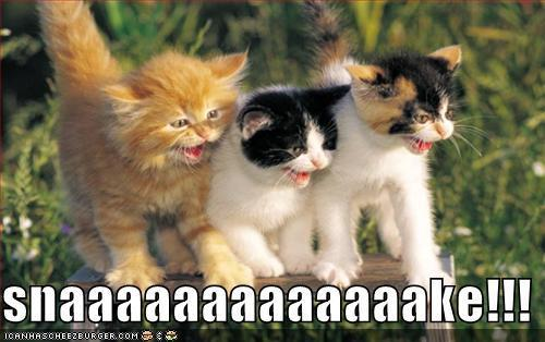 Cute Kittens images Funny kitahs..... LoL wallpaper and background photos