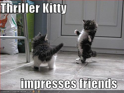 Funny Kitahs  Lo L Cute Kittens 10032513 500 375
