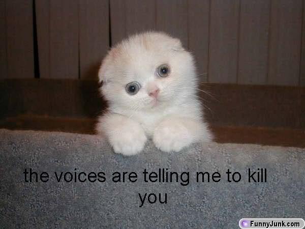 Cute kittens funny kitahs lol