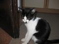 My kitty Mile