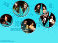 wallpaper  - the-jonas-brothers wallpaper