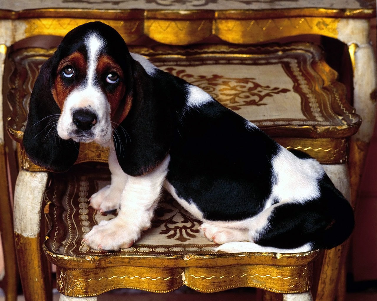 Basset Hounds images Basset Hound HD wallpaper and