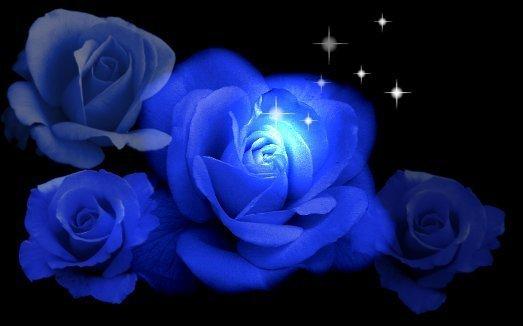Blue roses roses 10112533 523 326