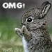 OMG - cute-animals icon