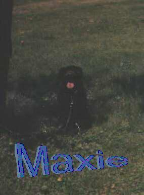 This is a picture of a dog named maxie who has worms and wont live long:(