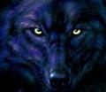 wolves/ Werewolfs