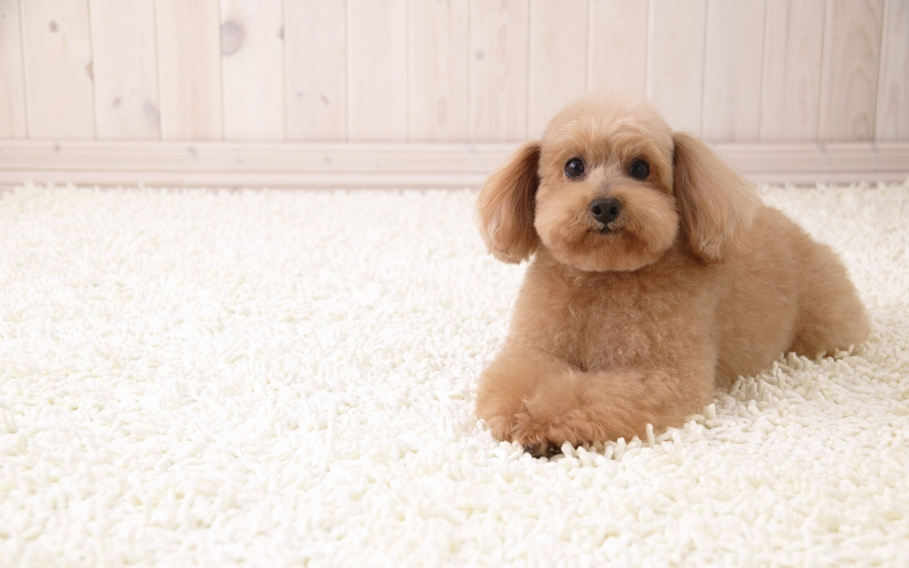 ♥ Puppies ♥