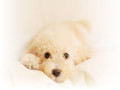puppies - ♥ Puppies ♥ wallpaper