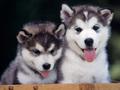 ♥ cachorritos ♥