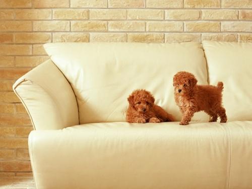 ♥ 子犬 ♥