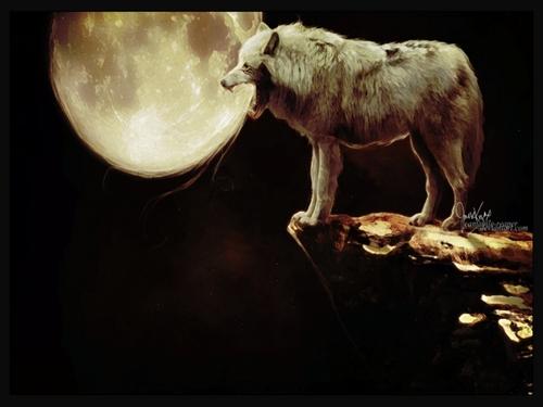 ~♥ 狼 ♥ ~