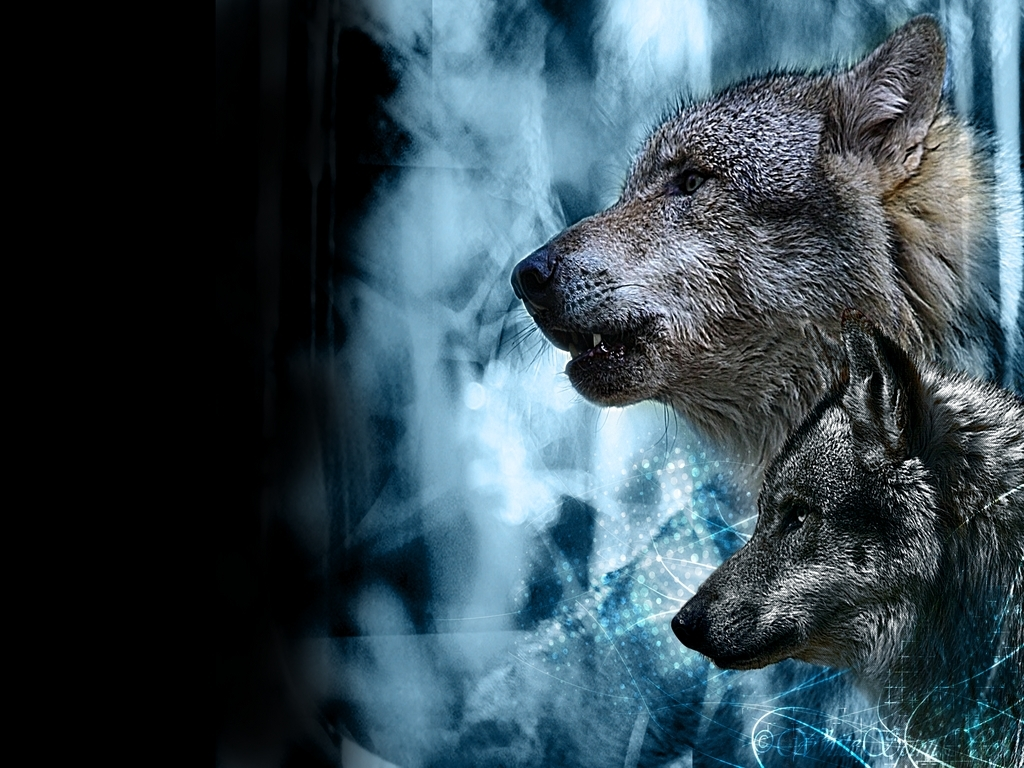 Wolves ♥ wolves ♥