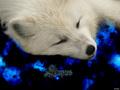 wolves - ~♥ Wolves ♥ ~ wallpaper