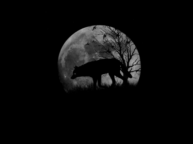 wolves wallpapers. Wolves Wallpaper