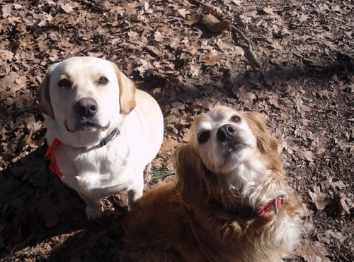 Chip & Charlie