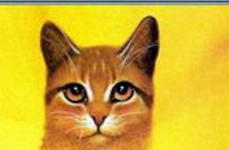 Ferndapple the med. cat