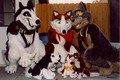 balto steele and jenna stuffed animals