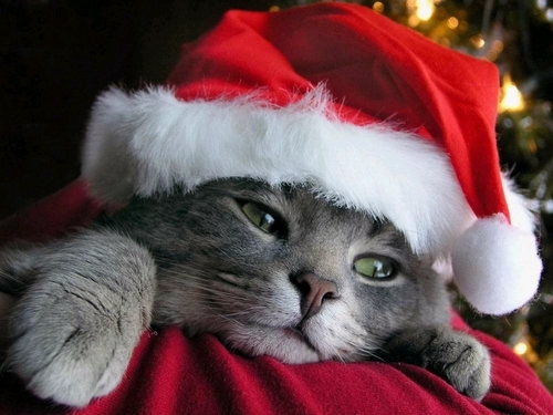 christmas kitties - cute-kittens Wallpaper
