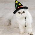 cute cat witch