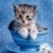cute cats - cute-kittens icon