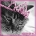 kitties - cute-kittens icon