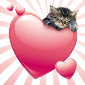 Cute Kittens wallpaper called valentine kitten