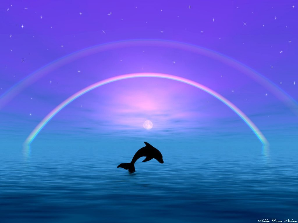 dolphins dolphins wallpaper 10345767 fanpop