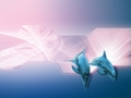 ~♥ Dolphins ♥ ~ - dolphins wallpaper