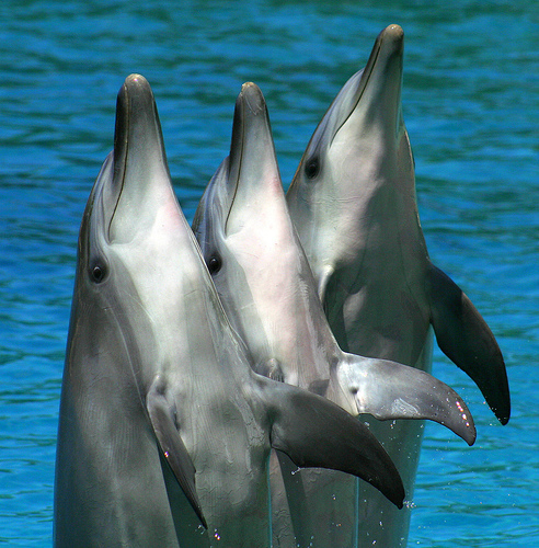 ~♥ Dolphins ♥ ~