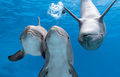 ~♥ Dolphins ♥ ~ - dolphins photo