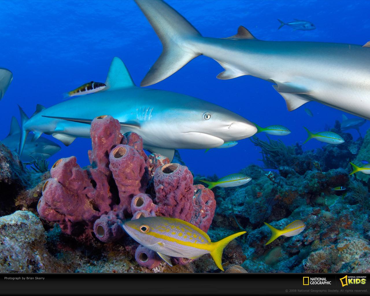 壁纸 海底 海底世界 海洋馆 水族馆 桌面 1280_1024