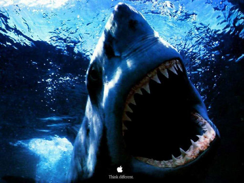 ~♥ 鮫, サメ ♥ ~