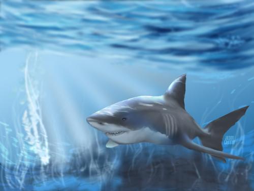 ~♥ tubarão ♥ ~