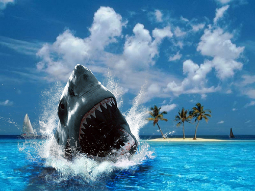 Sharks images Shark HD wallpaper and background photos