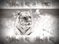 ~♥ Tiger ♥ ~ - tigers wallpaper