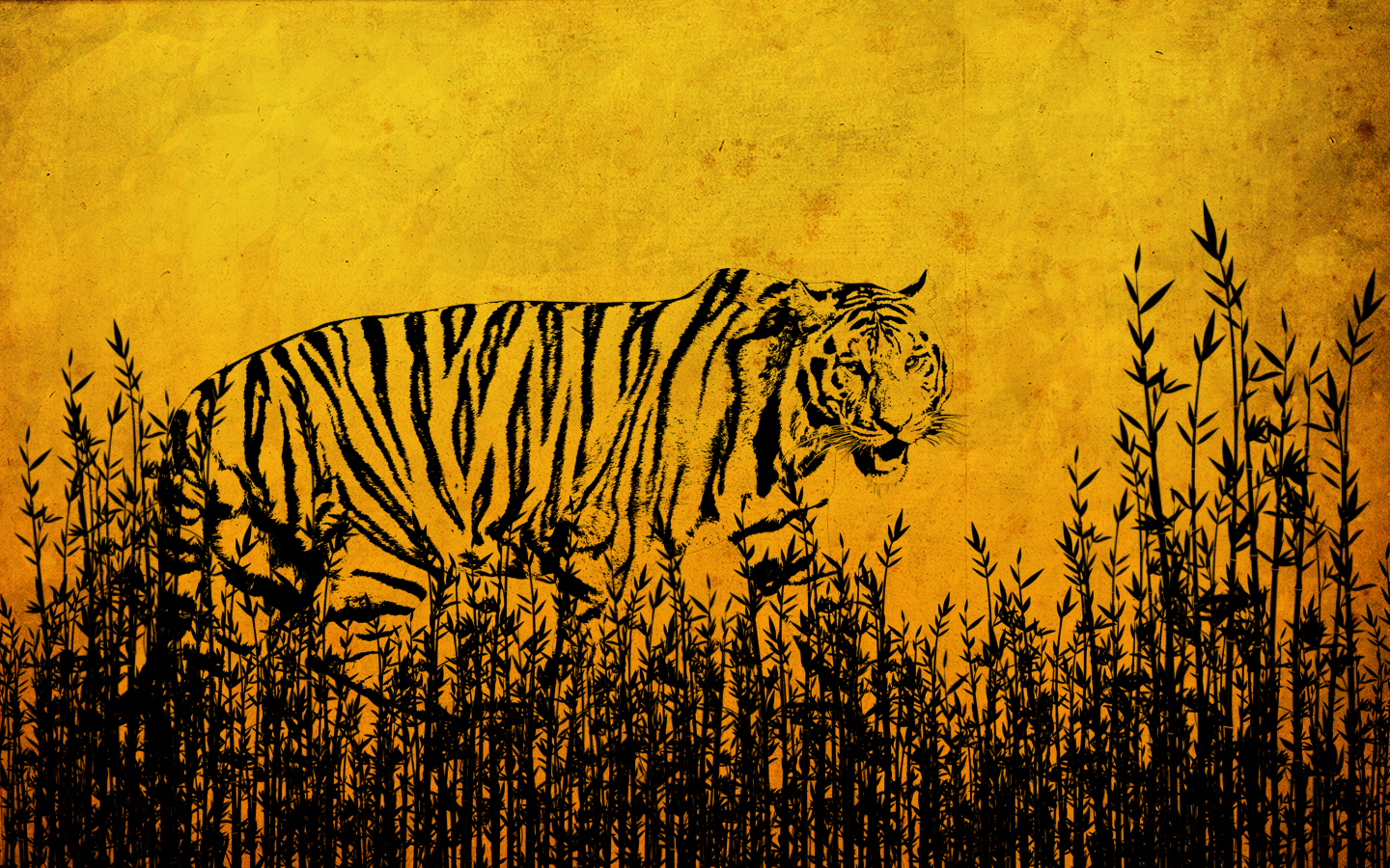 tigers images ~♥ tiger ♥ ~ hd wallpaper and background photos