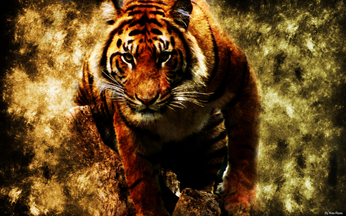 ~♥ Tiger ♥ ~