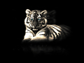 ~ Tiger  ~ - tigers wallpaper