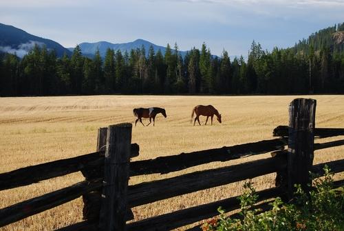 Horses, Camping