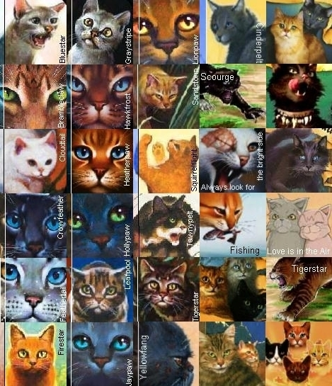 Which Dawn Of The Clans Warrior Cat Are You: Cool Warrior Cats