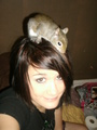Meh and Hammy - squirrels photo