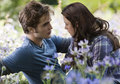 NEW ECLIPSE PICTURES - twilight-series photo