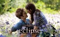 New Still Eclipse - eclipse photo
