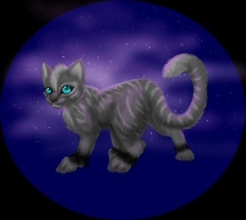 Rainstar of Thunderclan (that's me)