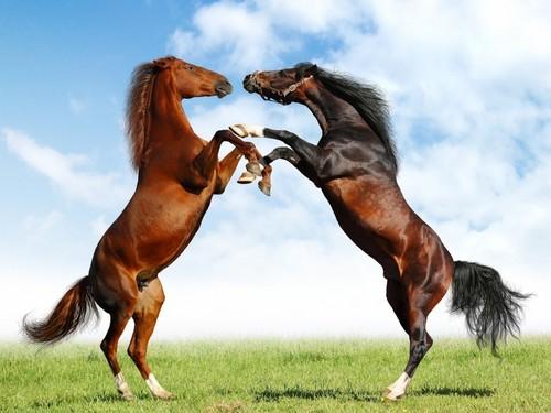 Horses wallpaper called hores